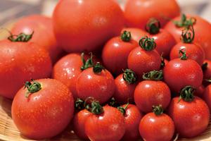 トマト/白いとうもろこし/花卉