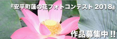 安平町蓮の花フォトコンテスト2018
