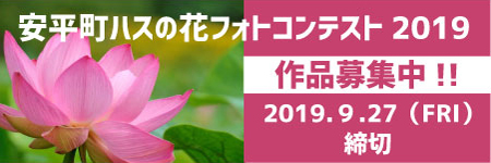 安平町ハスの花フォトコンテスト2019