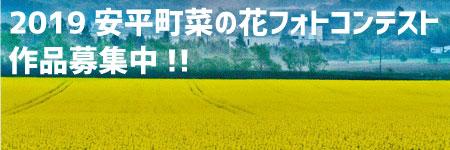 2019安平町菜の花フォトコンテスト